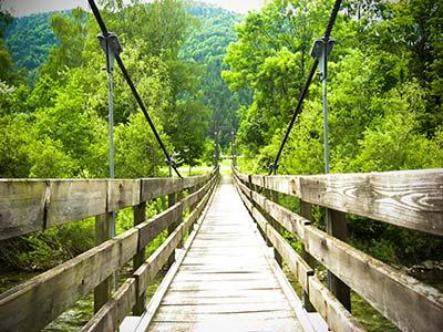 bridge-into-forest